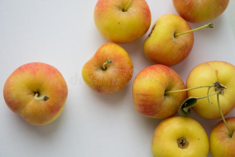 Many small apples in hand. Ripe harvest stock photos
