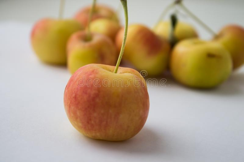 Many small apples in hand. Ripe harvest stock photography