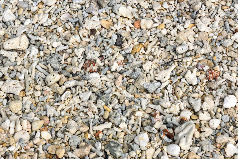 Many small corals on the beach. Background texture royalty free stock photography