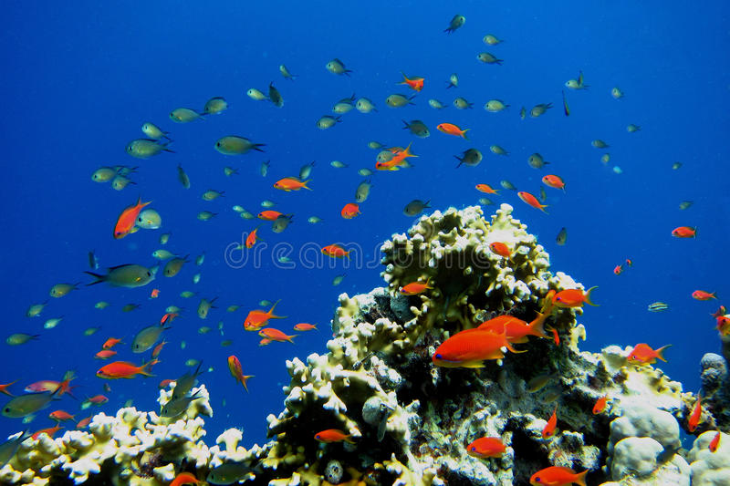 many small fish in the coral stock photo
