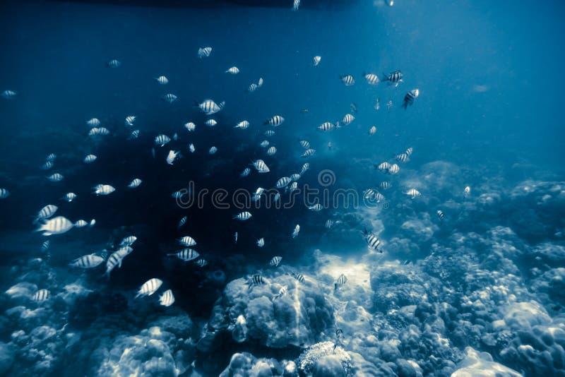 Many small fish swimming stock photo