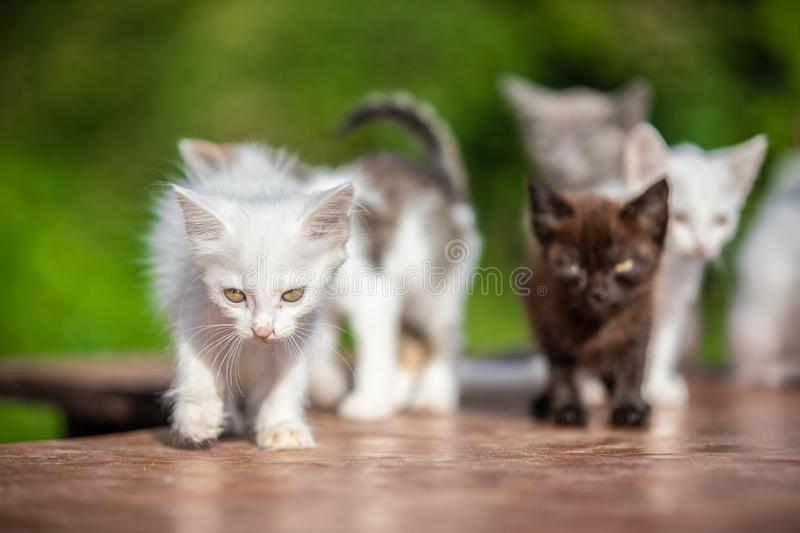 Many small kittens on blurred green background at morning royalty free stock photo