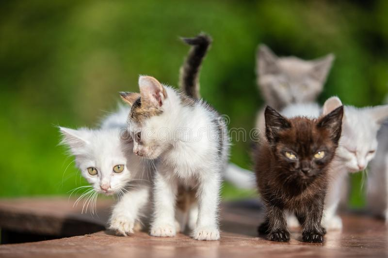 Many small kittens on blurred green background at morning royalty free stock photos
