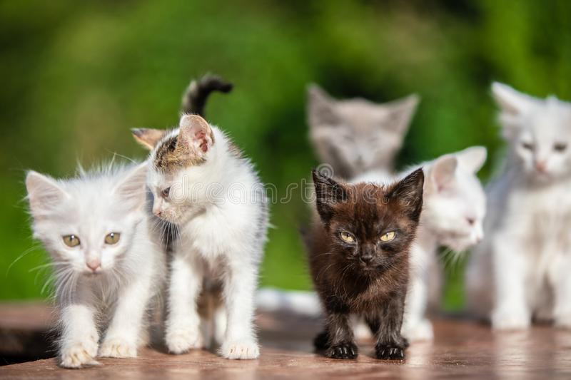 Many small kittens on blurred green background at morning stock images