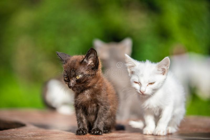 Many small kittens on blurred green background at morning royalty free stock photography