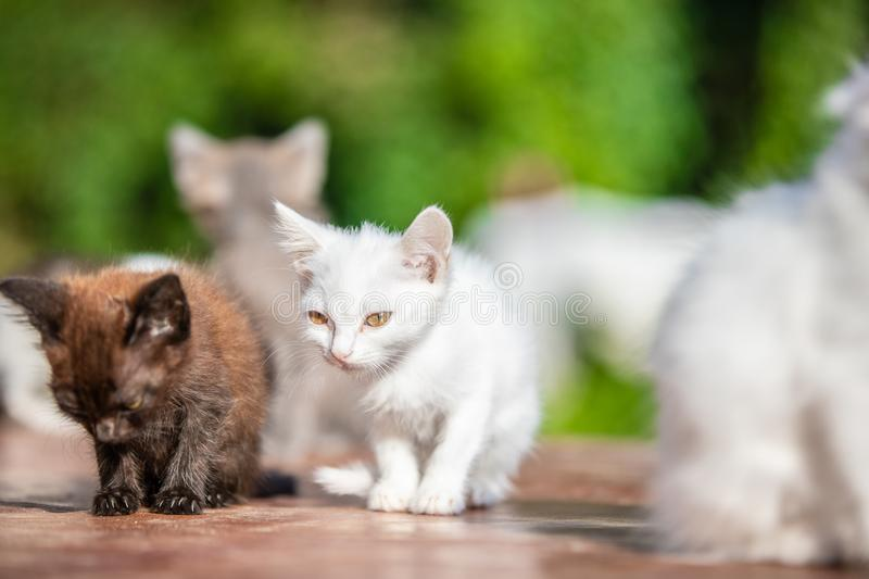 Many small kittens on blurred green background at morning royalty free stock image