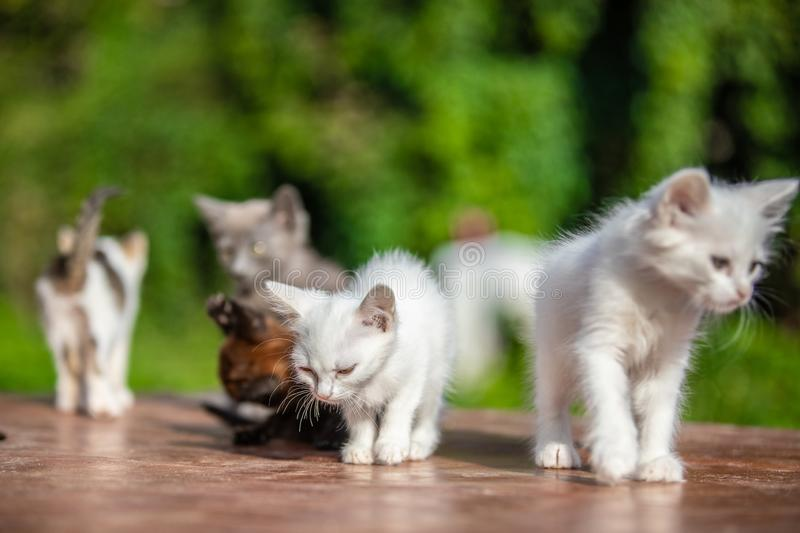 Many small kittens on blurred green background at morning stock photography