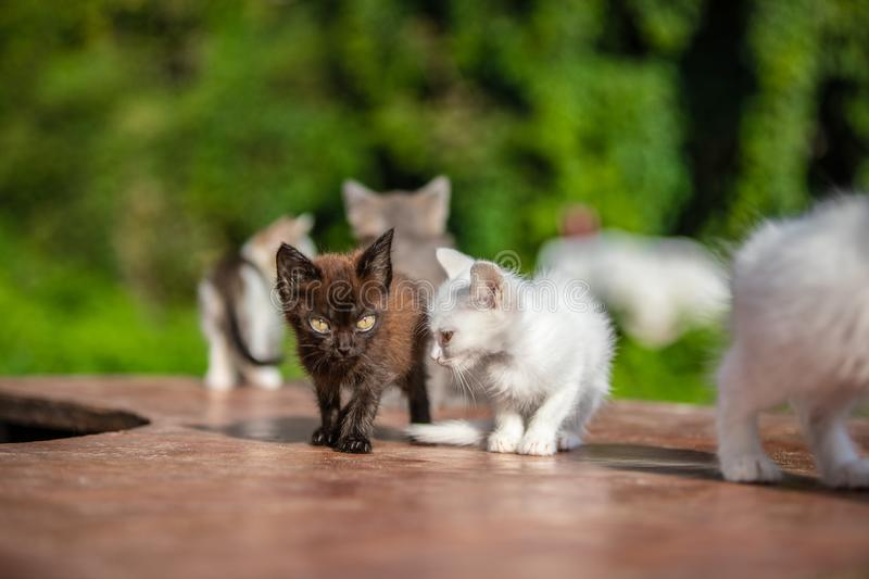 Many small kittens on blurred green background at morning royalty free stock images