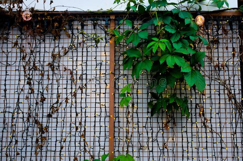 Many small led lights on the white wall with iron fence and leaves. Little led lights background royalty free stock photos