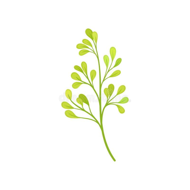 Many small leaves on the stem. Vector illustration on white background. stock illustration