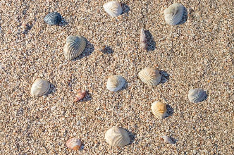 Many small sea shells, different size on the sand stock photo