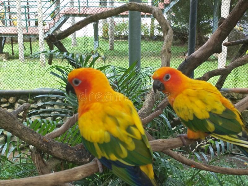 Bird in a zoo. Many species of birds are economically important as food for human consumption and raw material in manufacturing, with domesticated and stock images