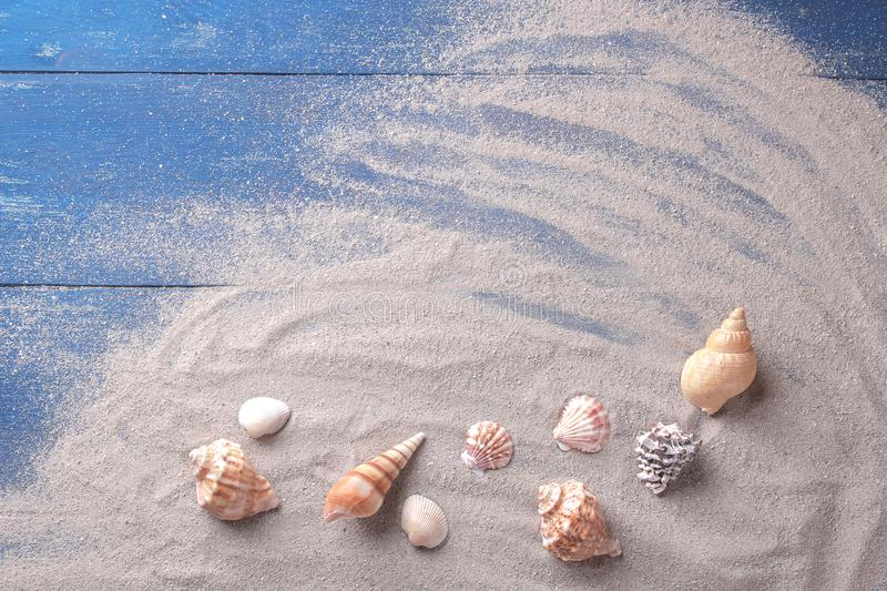 Many species of sea shells on the sand of the sea on a blue wooden background. royalty free stock photo