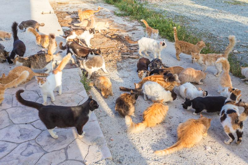 Many stray. Cats are dirty, they get sick, cats need a vet and a new home. Many stray cats against a brick wall. Cats are dirty, they get sick, cats need a vet stock photos