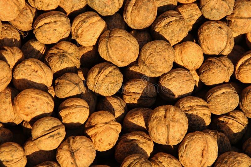 many table walnuts стоковые изображения