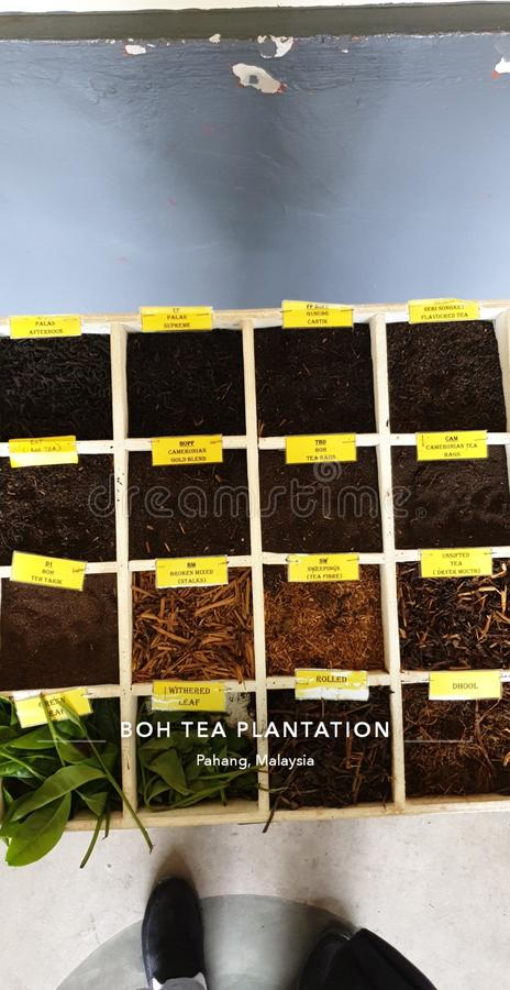 Many of Tea Types stock photo