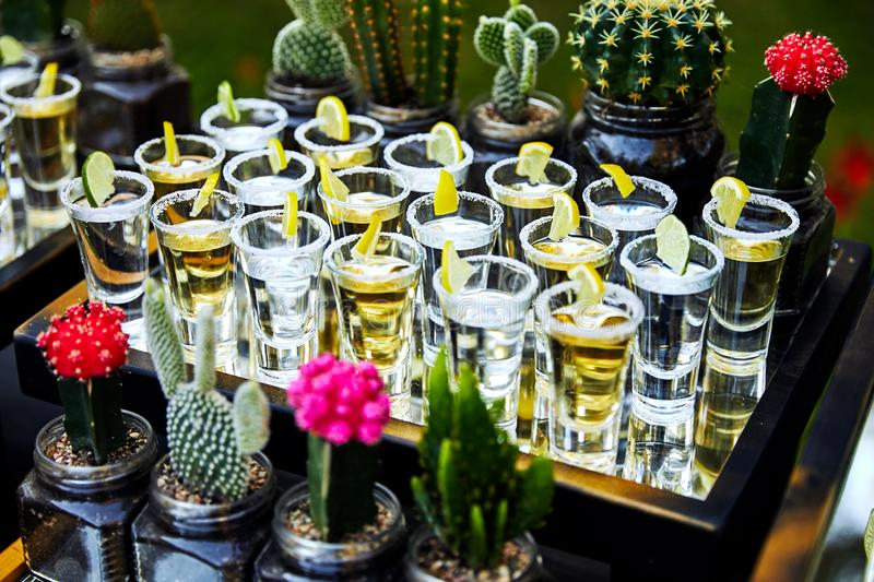 Many tequila glasses with lemon and cactus royalty free stock photography