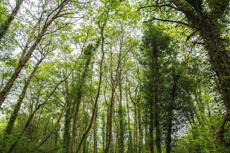 Many trees of the marsh forest royalty free stock images