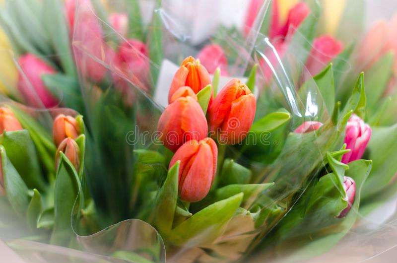 Multi-color bouquets of tulips - top view royalty free stock photo