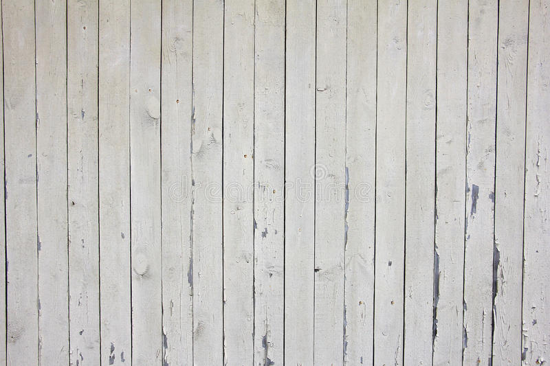many vertical beige wooden planks with nails  texture stock photo