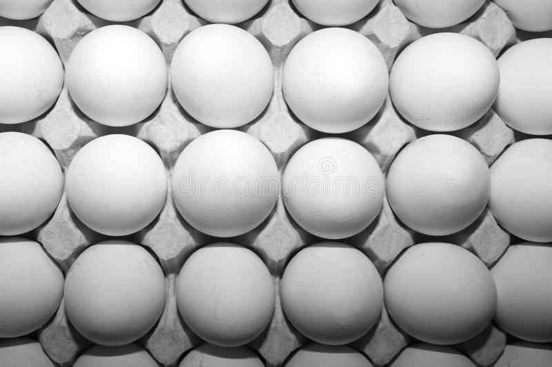Many white eggs in a tray for stock image