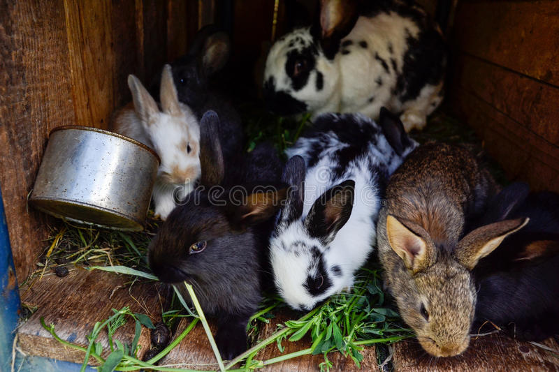 Many young sweet bunnies in a shed. A group of small colorful rabbits family feed on barn yard. Easter symbol.  stock image
