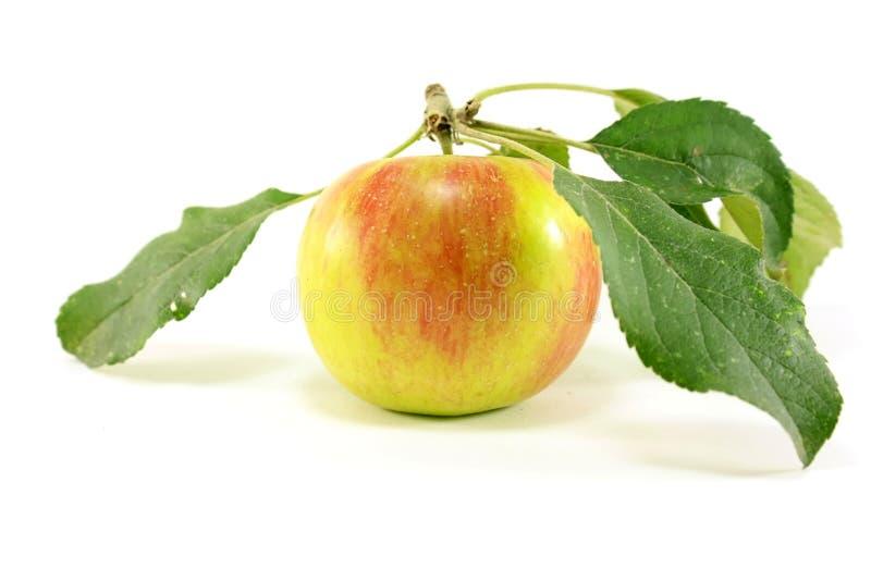 Manzana anaranjada/amarilla con las hojas imágenes de archivo libres de regalías