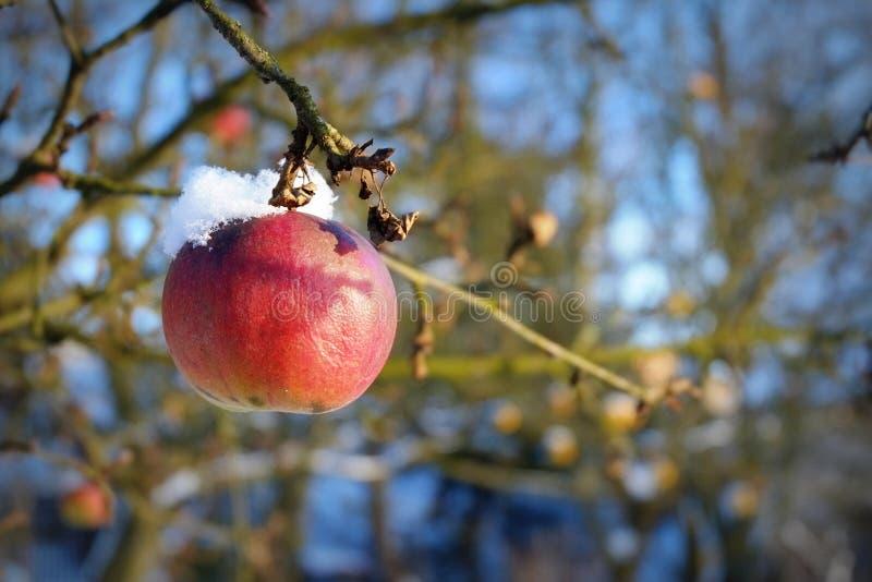 Manzana congelada fotos de archivo