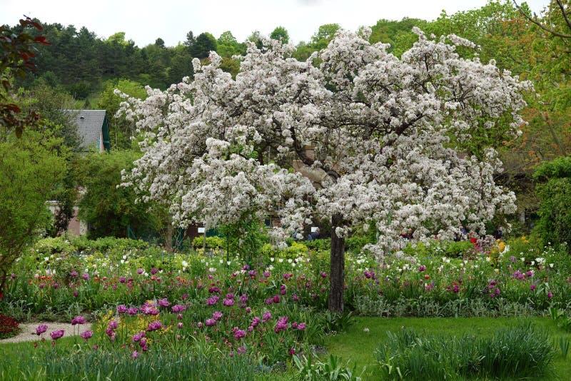Manzana de cangrejo japonés en el jardín de Monet en Giverny fotos de archivo libres de regalías