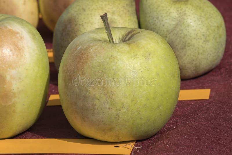 Manzana fresca dulce fotos de archivo libres de regalías