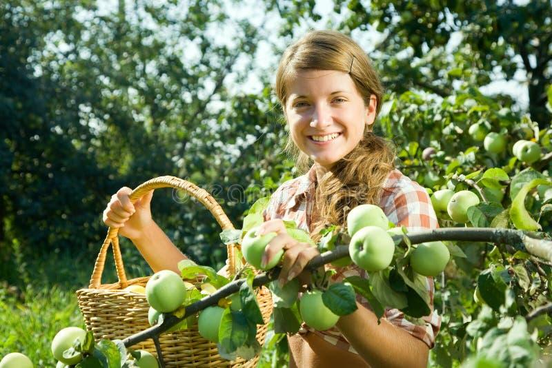 Manzana joven de la cosecha de la muchacha de granja foto de archivo