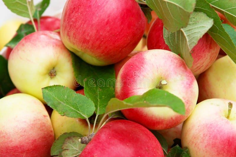 Manzana orgánica fotos de archivo