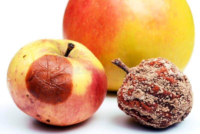 Manzana putrefacta y manzana fresca aislada en el fondo blanco fotos de archivo