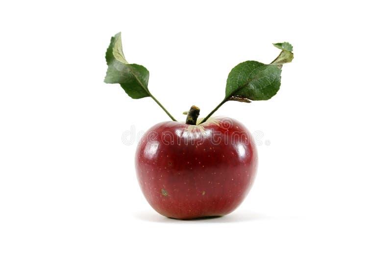 Manzana roja con las hojas fotografía de archivo