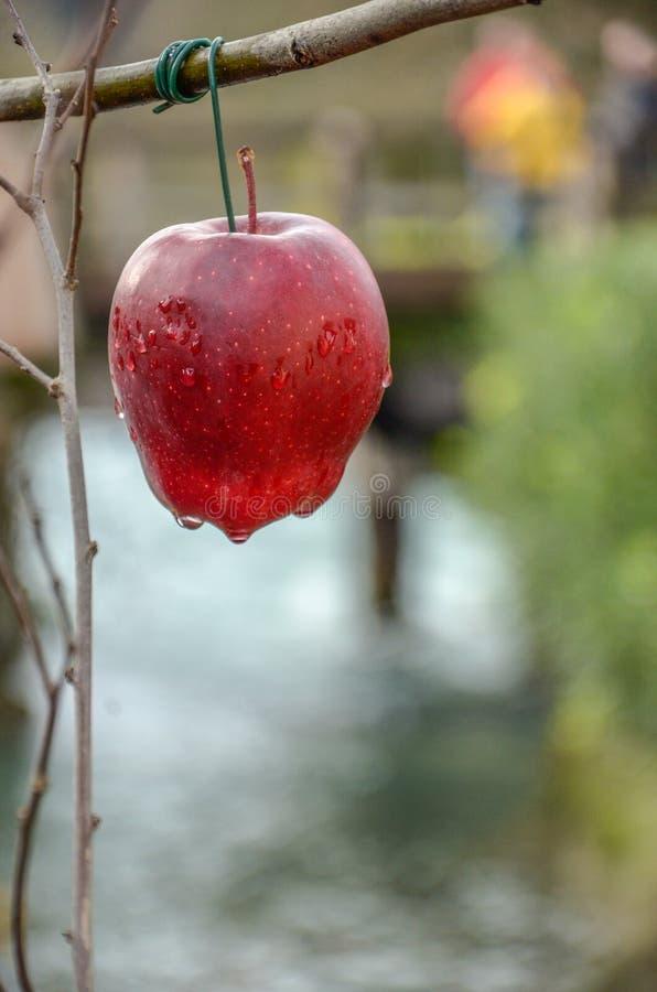 Manzana roja con rocío imagen de archivo