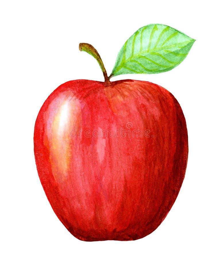 Manzana roja dibujada mano de la acuarela Ejemplo natural aislado de la fruta de la comida del eco en el fondo blanco stock de ilustración