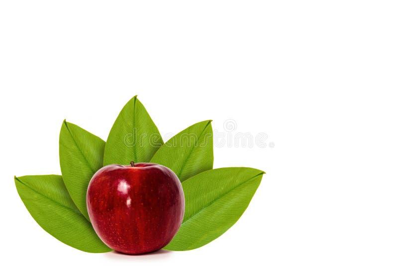 Manzana roja fresca en el fondo de hojas verdes Aislado en blanco noción del origen natural fotografía de archivo libre de regalías