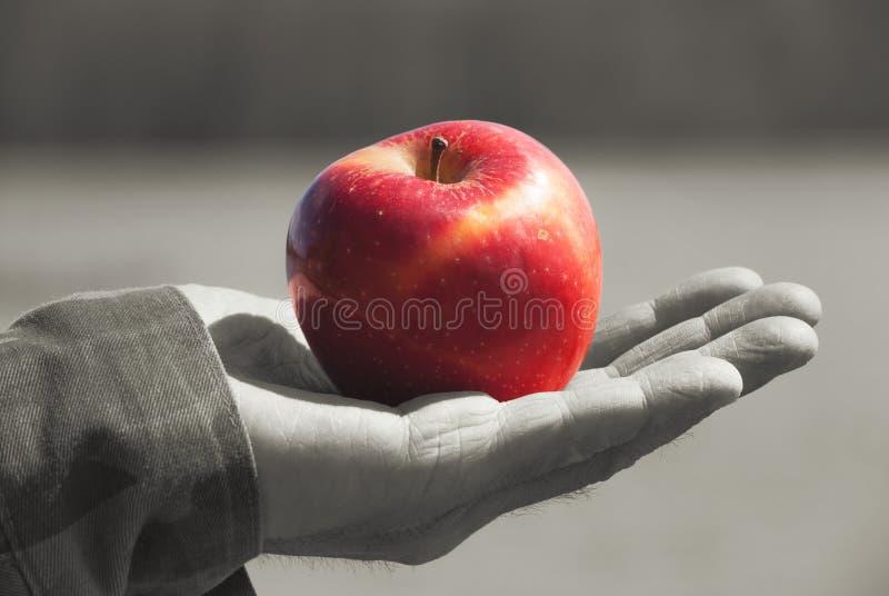 Manzana sólida jugosa joven roja de la fruta bajo luz del sol en un gato viejo para hombre de un hombre mayor, contra fondo un ag fotos de archivo