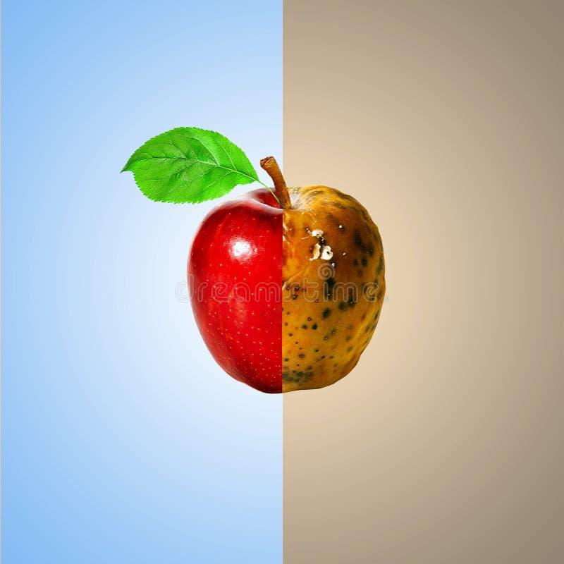 Manzana sana y putrefacta imagenes de archivo
