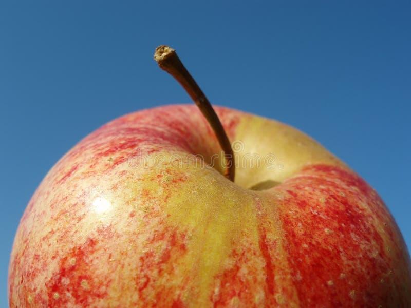 Manzana verde y roja imagen de archivo libre de regalías