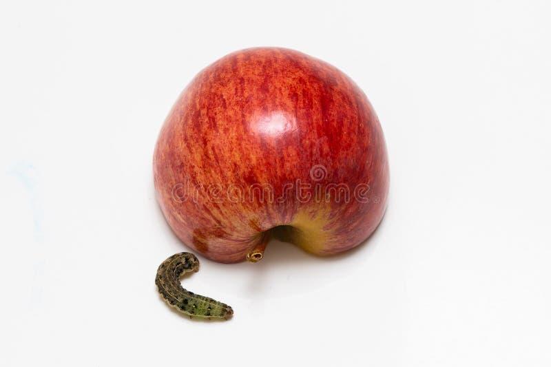 Manzana y oruga rojas en un fondo blanco imágenes de archivo libres de regalías