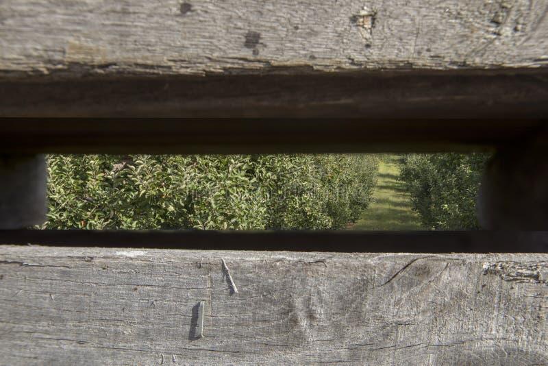 Manzanar a través de los listones de madera del compartimiento imagen de archivo