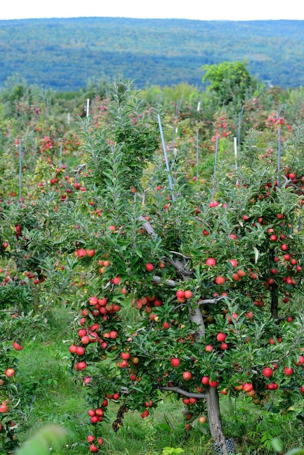 Manzanar y montañas verdes fotografía de archivo libre de regalías