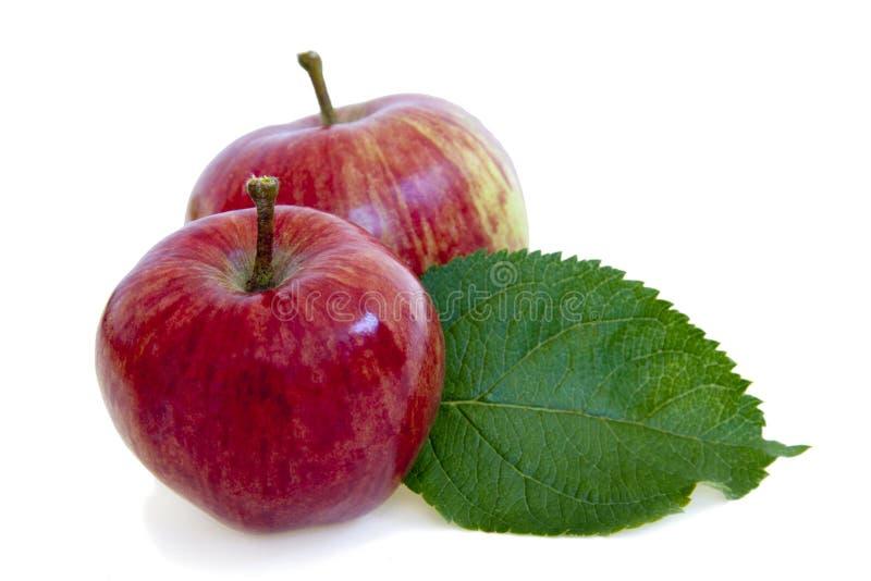 Manzanas aisladas en blanco fotografía de archivo