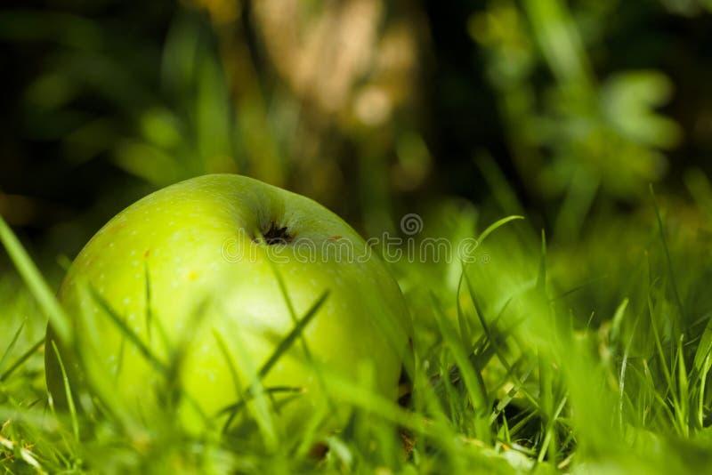 manzanas caídas en el suelo imagenes de archivo