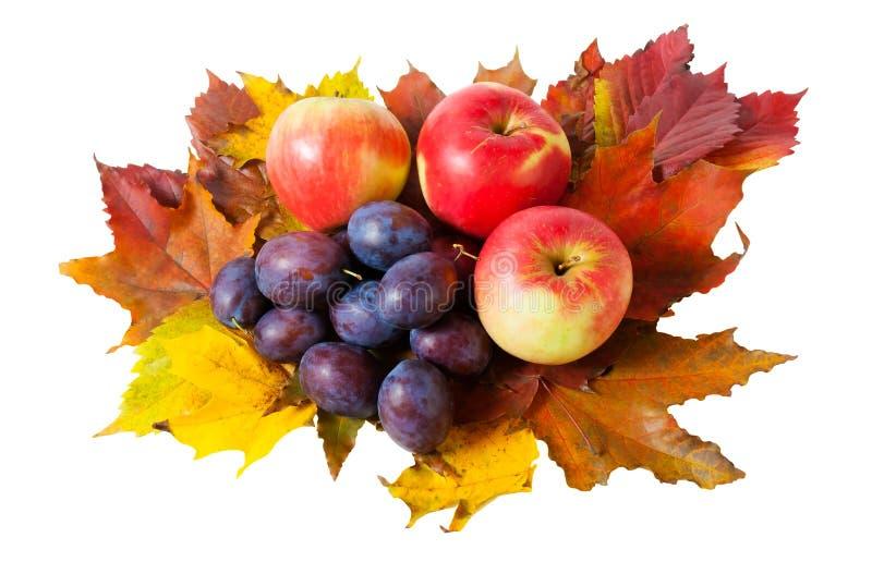 Manzanas, ciruelos y hojas de otoño aisladas fotografía de archivo libre de regalías
