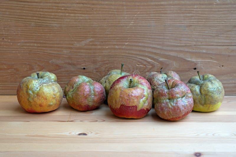 Manzanas con daño de la helada fotos de archivo