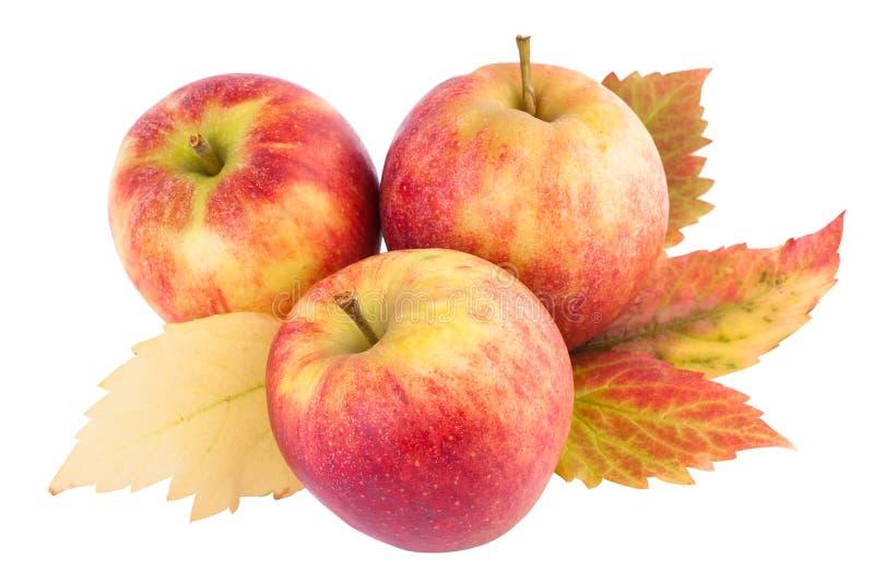 Manzanas con las hojas de otoño imagenes de archivo