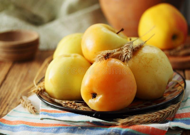 Manzanas conservadas en vinagre fotografía de archivo libre de regalías