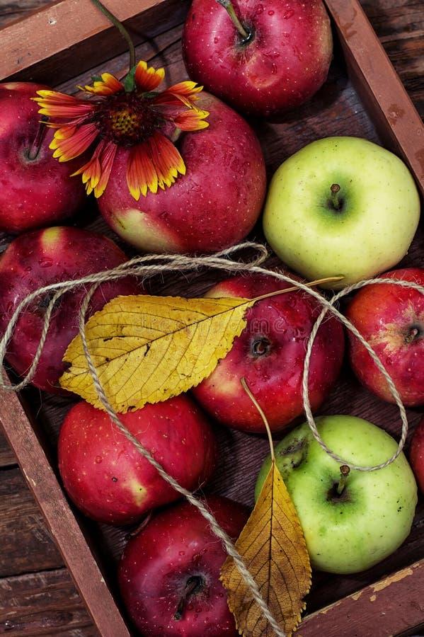 Manzanas cosechadas imágenes de archivo libres de regalías